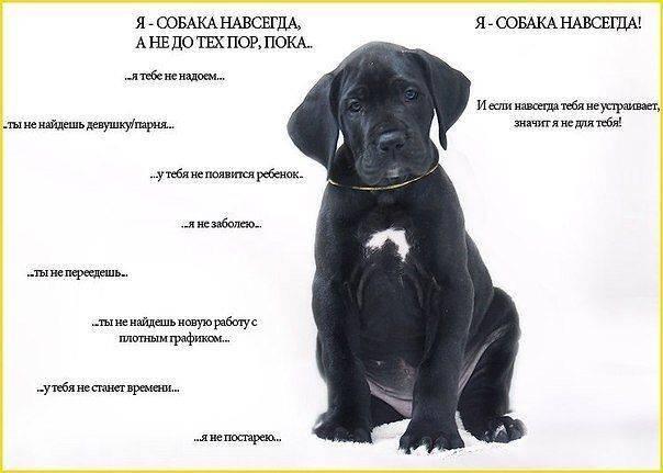 Язык собак (21 фото): как понять, что собака тебя любит? как выучить собачий язык жестов?