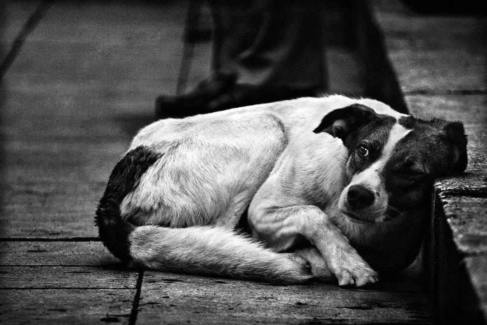 Причины агрессии у собак и 3 способа их устранения