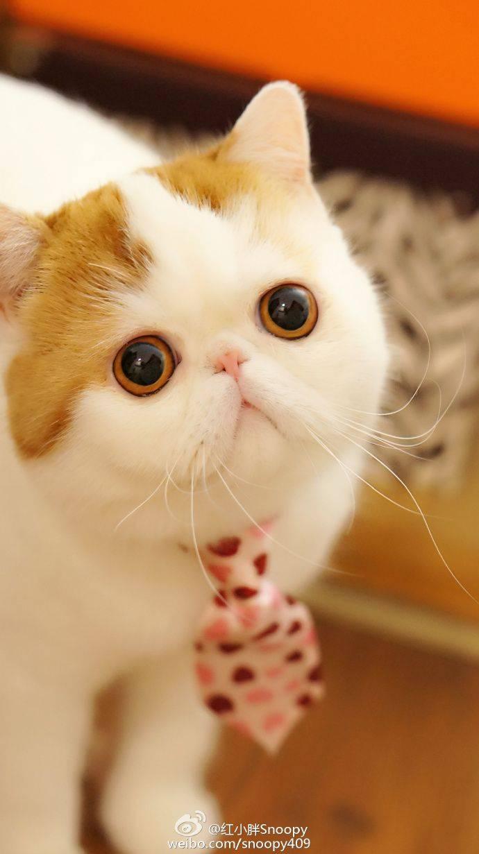 Кошки с большими глазами [фото + список пород]