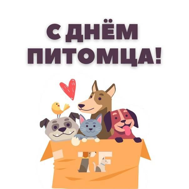 Кейс: как молодой сервис помощи бездомным животным привлек в партнеры мастодонтов рынка | rusbase