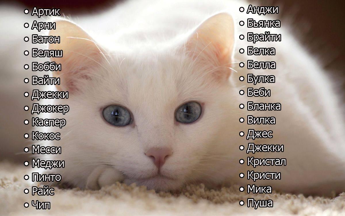 Примеры выбора русской клички для кота: список красивых и редких имен