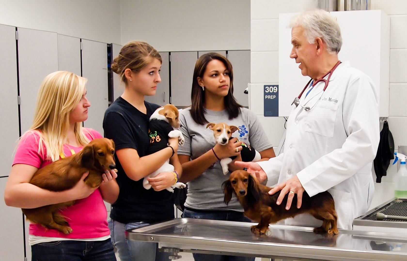Профессия ветеринар для любительниц животных: кто такой и чем он занимается