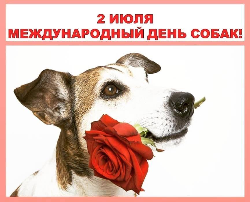 Международные и всемирные праздники и праздничные дни | про-каждыйдень.ru