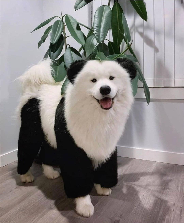 Квадратная стрижка собак