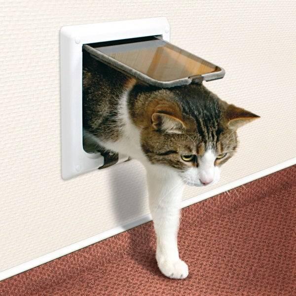 ᐉ лаз в двери для кошки, как сделать? - ➡ motildazoo.ru