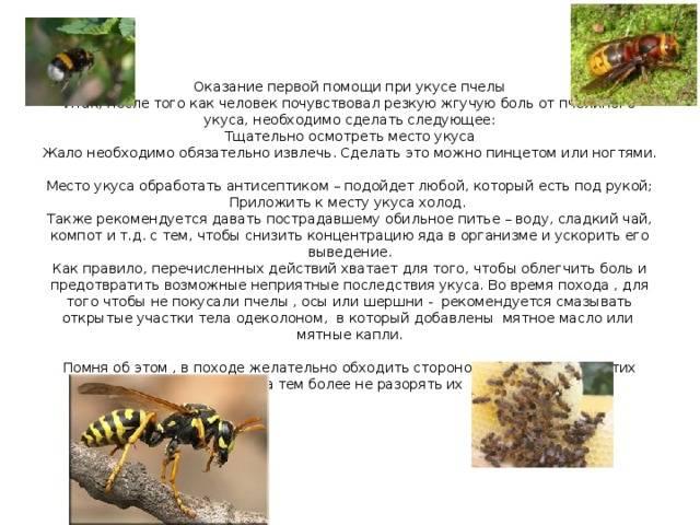 Что делать, если собаку укусила пчела, оса или шмель