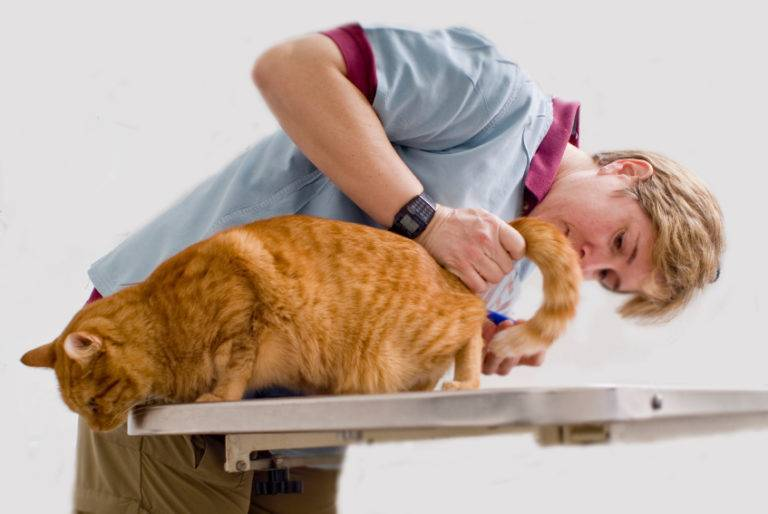 Цистит у собаки: признаки, лечение и профилактика
