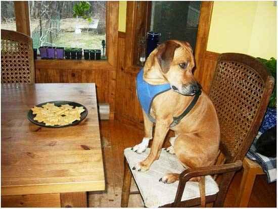 Причины  и способы лечения отсутствия аппетита у собак.