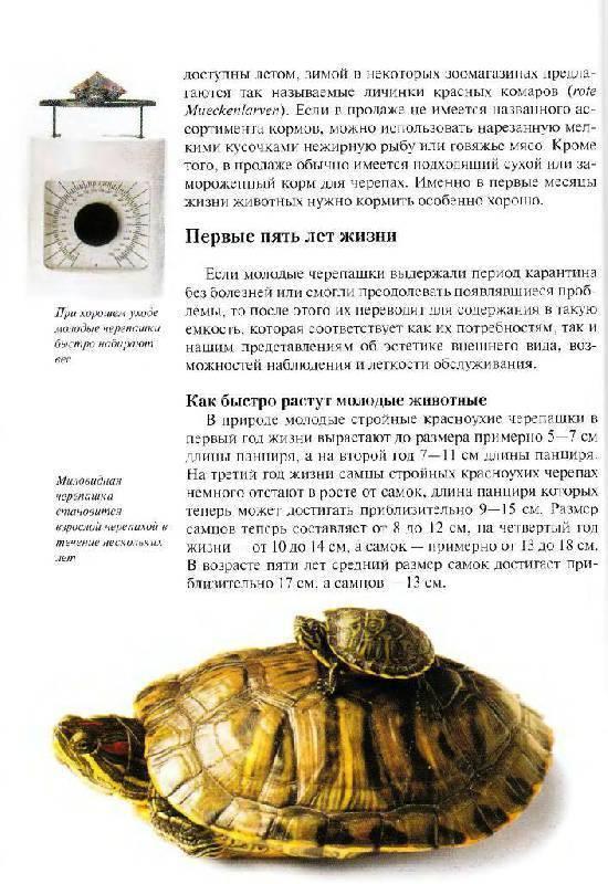Красноухая черепаха: 130 фото, советы опытных заводчиков, характер и поведение
