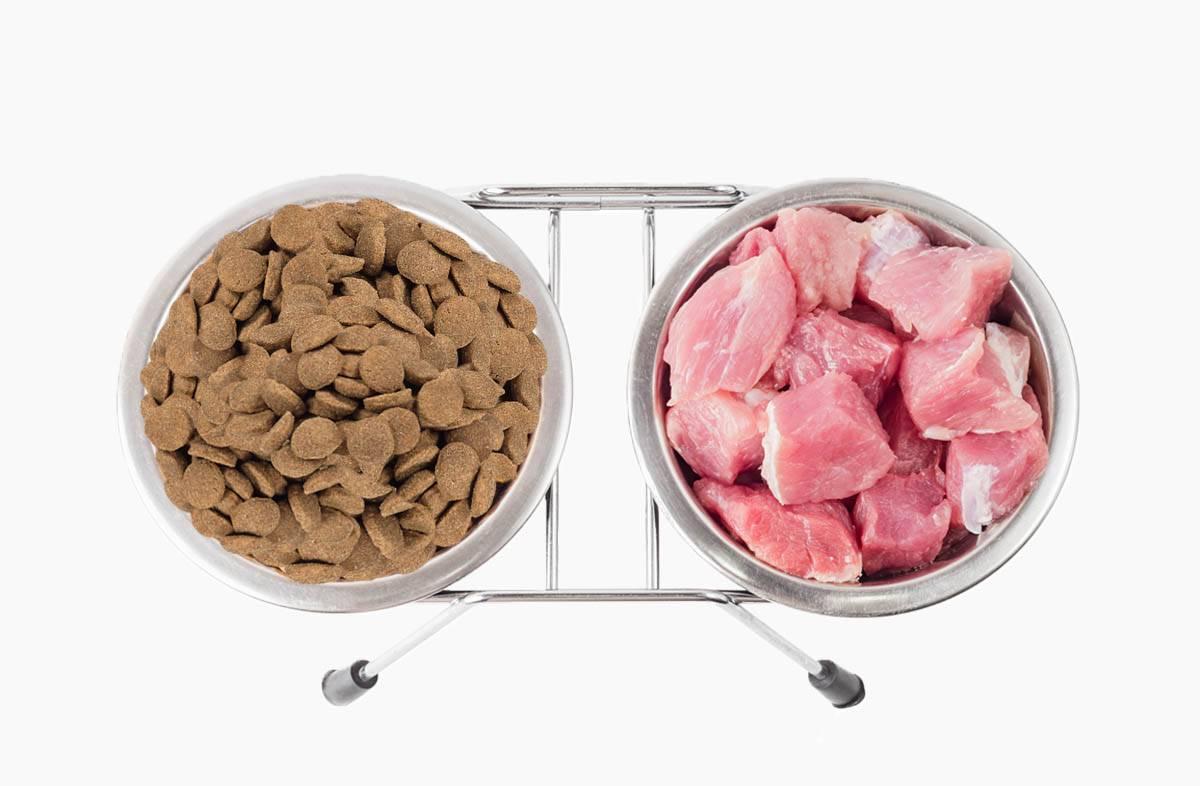 Чем кормить шарпея: рацион питания щенков и взрослых собак