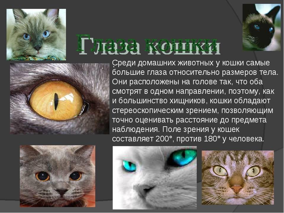 Как видят кошки и какие цвета они различают?