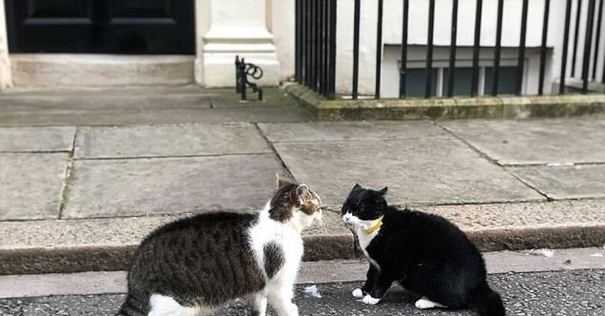 Коты и кошки лондона, увековеченные в памятниках | «англия»