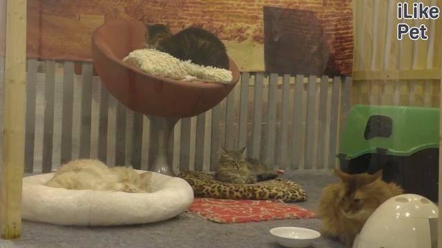 Ножницы для стрижки когтей у кошек: какой когтерез лучше, как пользоваться кусачками или щипцами? - kotiko.ru