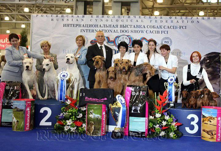Zooпортал.pro :: international dog show cacib – fci / интернациональная выставка собак (cacib – fci) гран при «петербург - элита 2021»