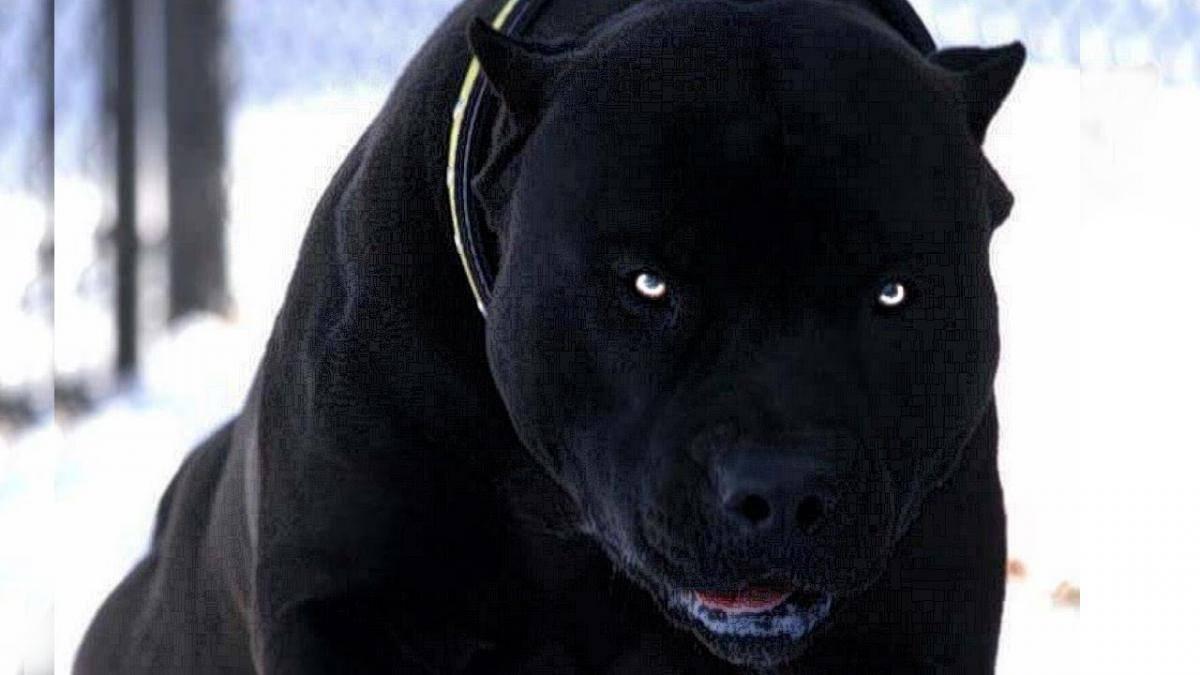 Топ 10 самых опасных пород собак в мире