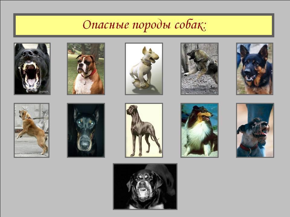 Новый перечень потенциально опасных собак будет сокращен. какие правила теперь должен знать владелец?