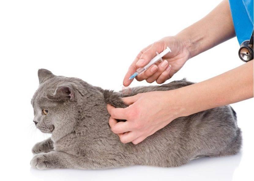 Подкожные инфузии капельницы кошкам как правильно делать. ставим капельницу кошке в домашних условиях. пошаговая инструкция и видео