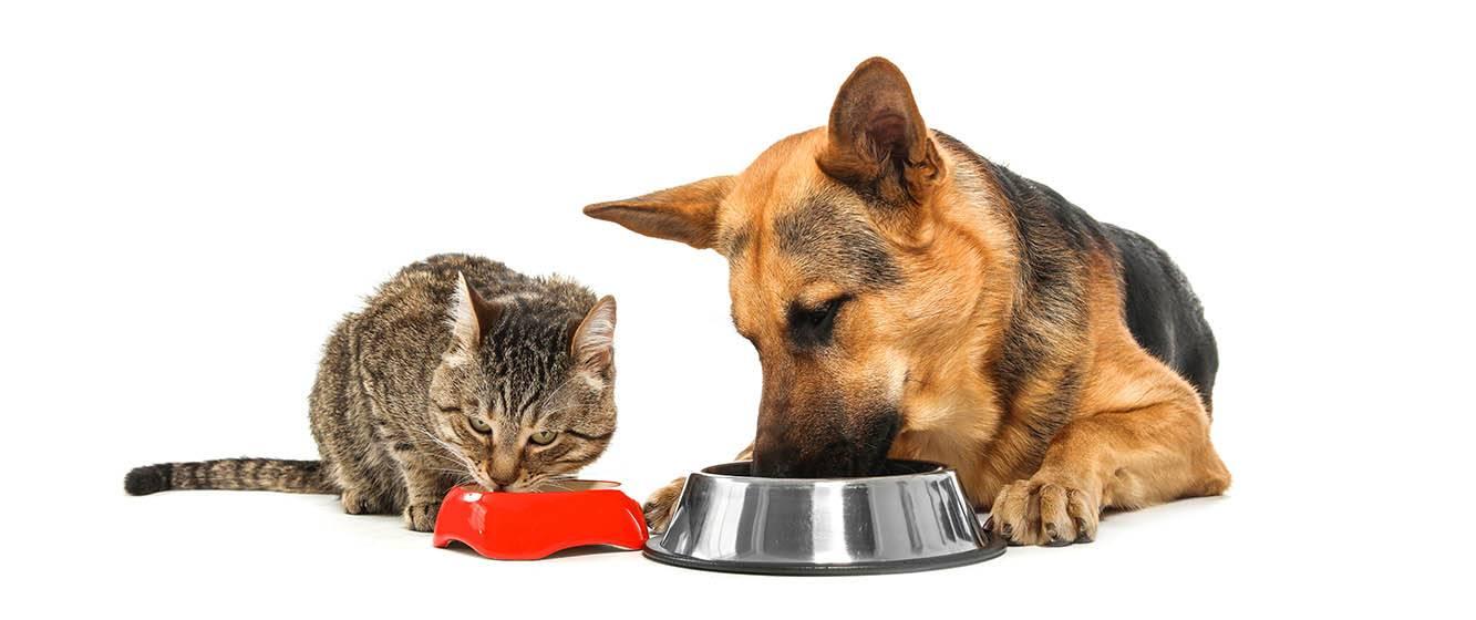 Стоит ли смешивать сухой корм и мясо для кошек?