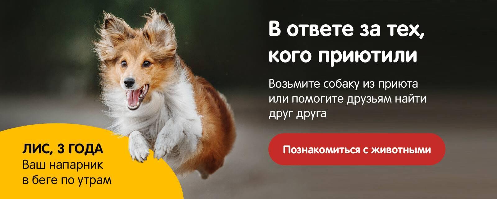 Как пристроить собаку в добрые руки