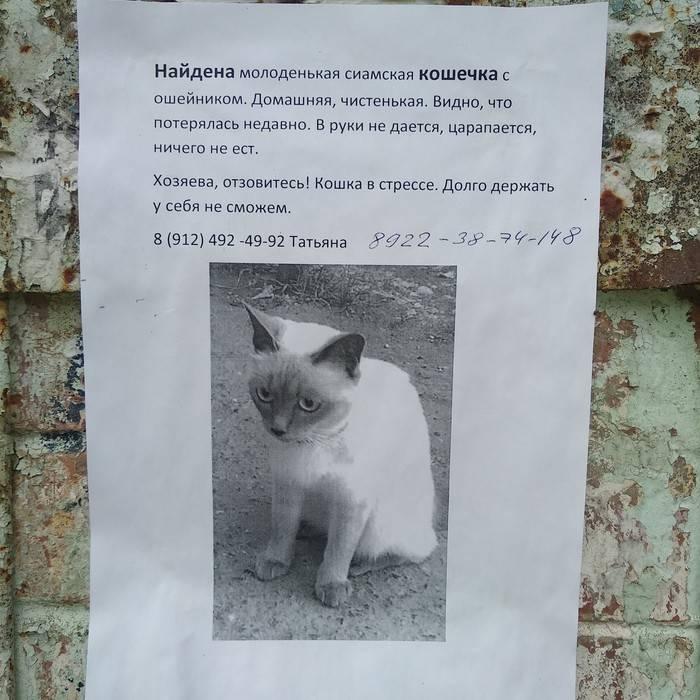 Что делать если потерялась кошка? 27 советов которые помогут ее найти