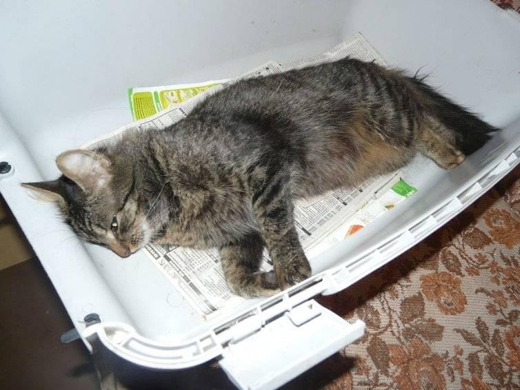 Можно ли хоронить животных на дачном участке — где похоронить кота в спб