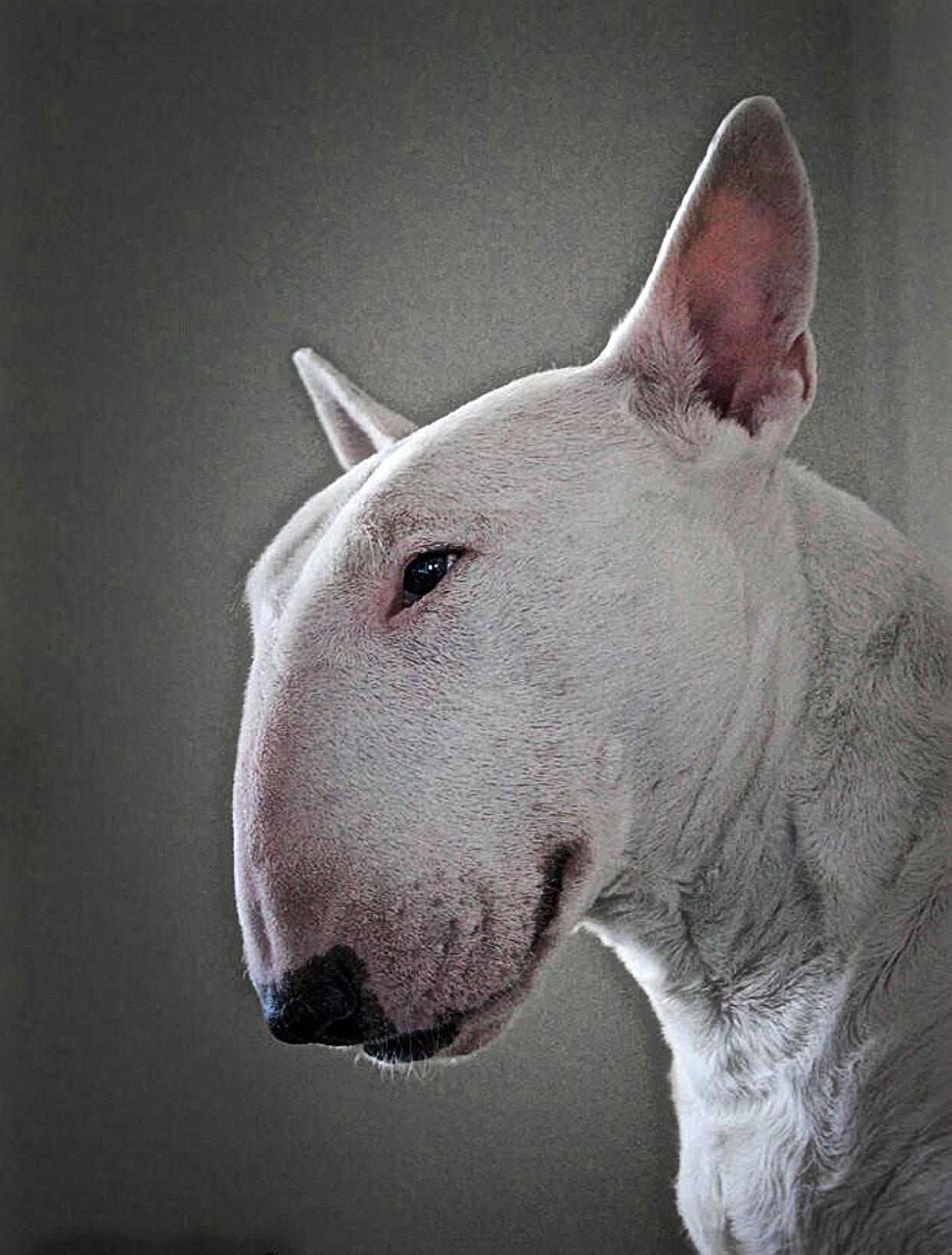 Какие есть породы собак с крысиной мордой