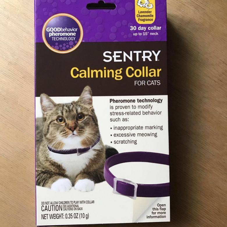 Ошейник с феромонами для кошек: советы по выбору успокаивающих и антистрессовых ошейников для котов