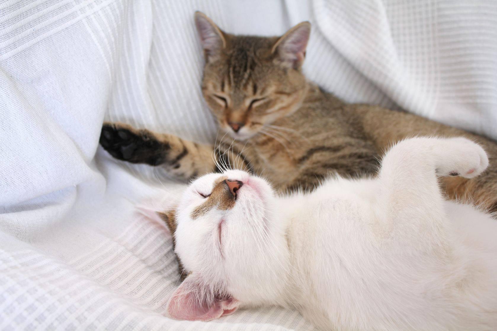 Почему кошки и коты спят в ногах у человека