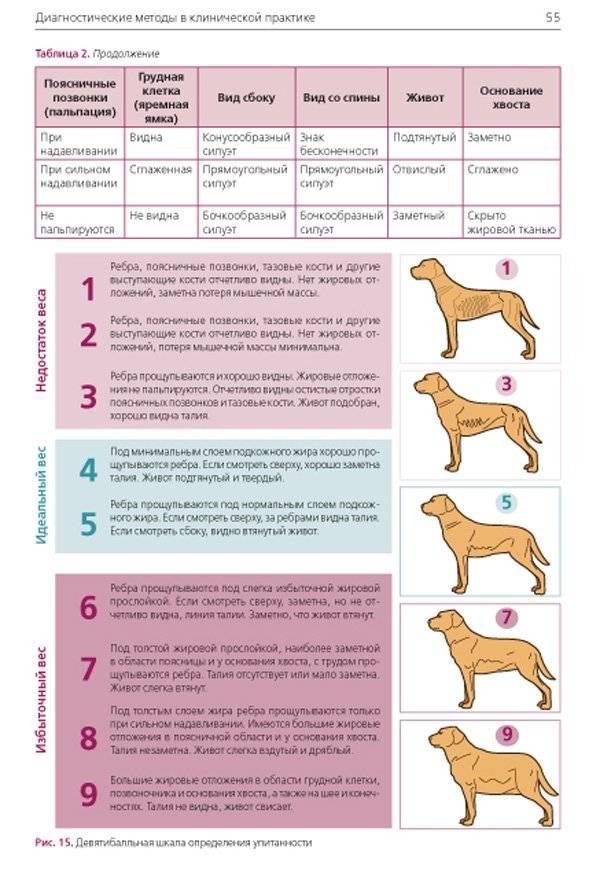 """Ожирение у собак - последствия, лечение, оценка кондиции собаки в москве. ветеринарная клиника """"зоостатус"""""""