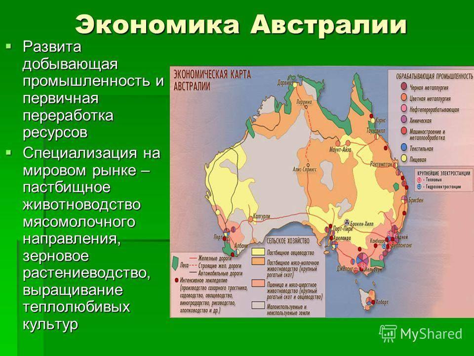 Австралийская дымчатая кошка: фото и описание породы (характер, уход и кормление)
