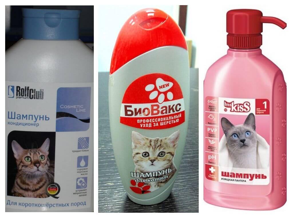 Как выбрать шампунь от блох для кошек - советы ветеринара