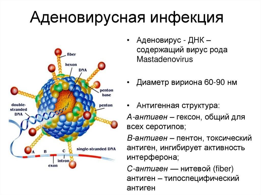 Диагностика и лечение аденовирусной инфекции | компетентно о здоровье на ilive