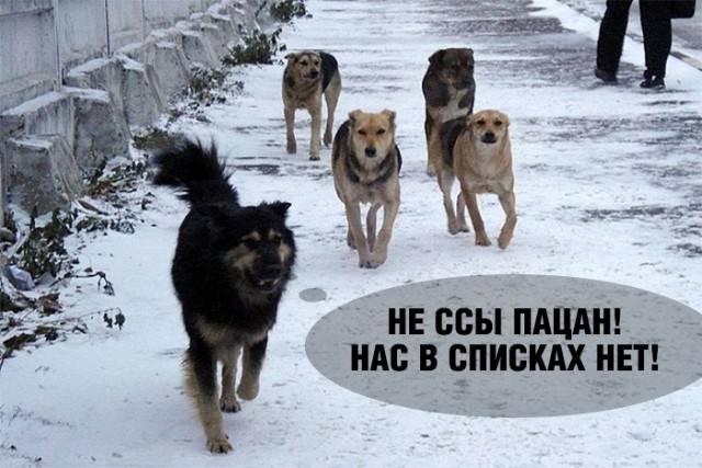 Списки опасных пород собак
