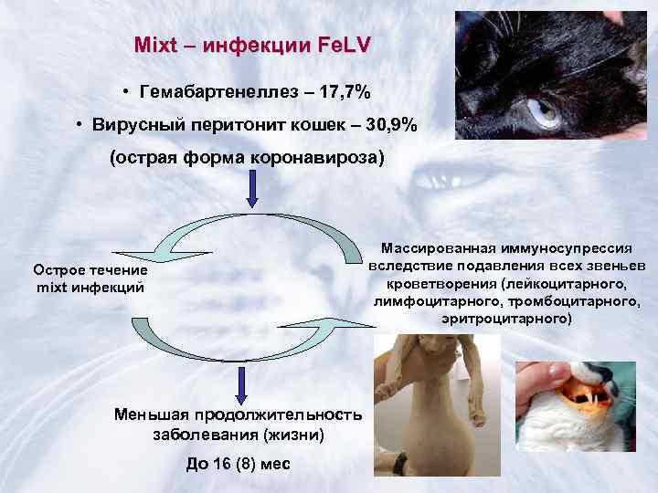 Гастроинтестинальные проявления при covid-19. восстановление работы жкт
