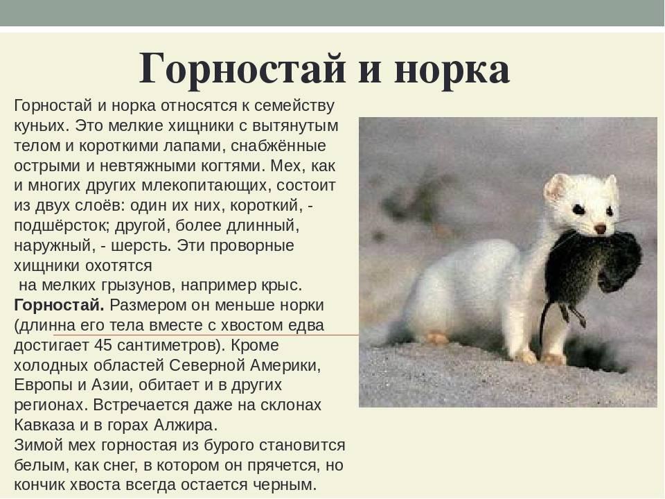Экзотические домашние животные (49 фото): каких питомцев запретят держать россиянам дома? список животных, которых можно держать в домашних условиях