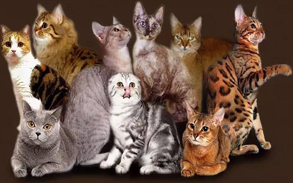 Редкие породы кошек: мурлыки, которых сложно найти, но легко узнать
