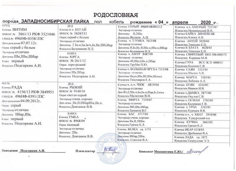 Характеристика западно-сибирских лаек: сколько живут зсл, вес, характер