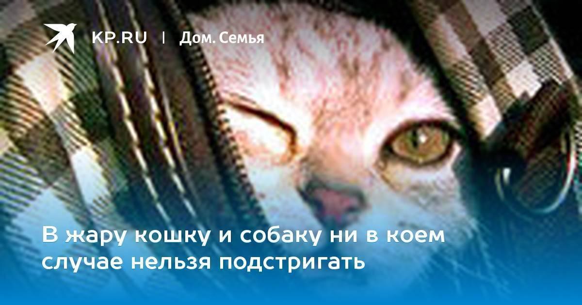 Как пережить смерть любимой кошки или кота и справиться с чувством вины: советы психолога и священника