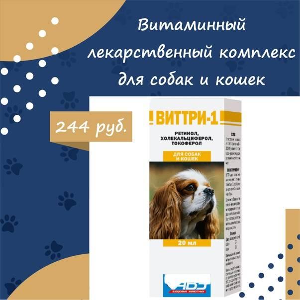 Виттри 1 для кошек: инструкция и показания к применению, отзывы, цена