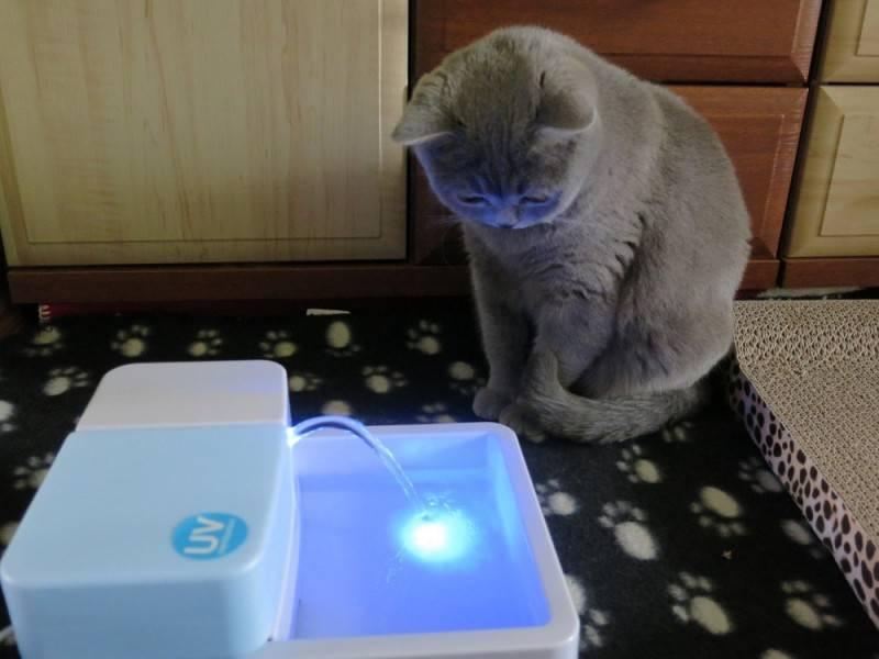Поилка для кошек: как выбрать подходящее устройство