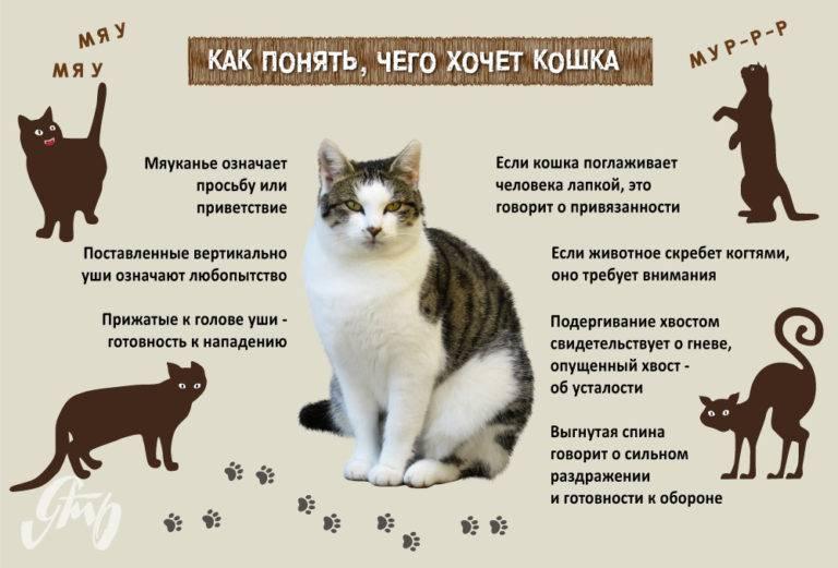 Почему нельзя целовать кошек: причины запрета