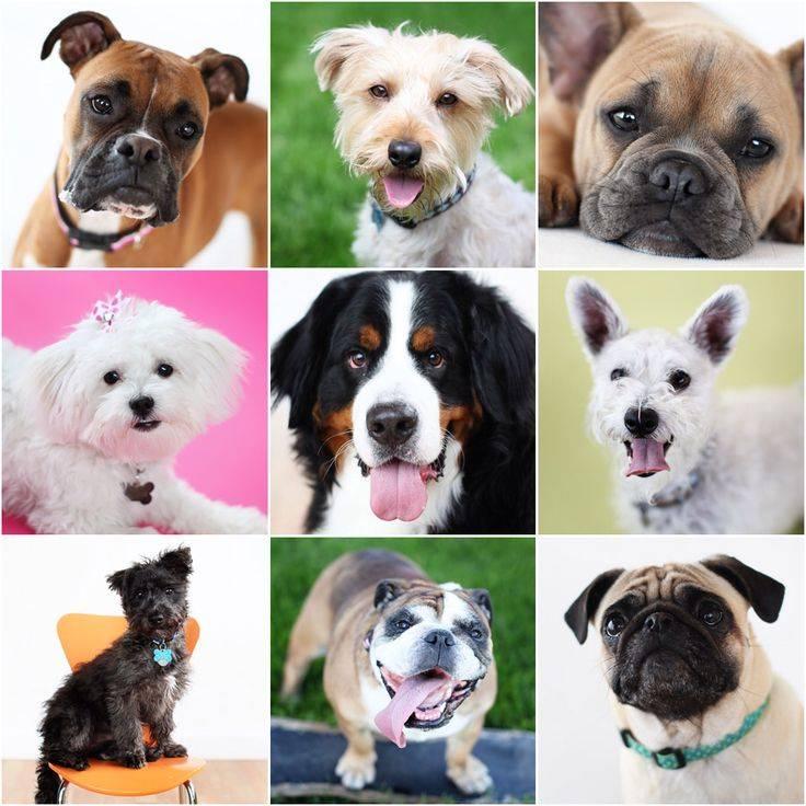 Какую собаку завести? лучшие породы для частного дома. как выбрать питомца для девочки 9 лет? тесты для выбора животного пенсионеру или работающему человеку. собаки на дачу и в деревню