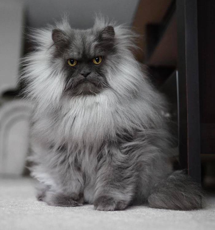 Самые красивые породы кошек в мире: фото с названиями