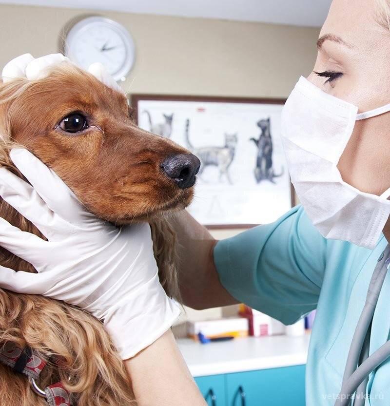 Ветеринары предупреждают: «не позволяйте вашим питомцам привезти нежелательных «гостей» из отпуска»