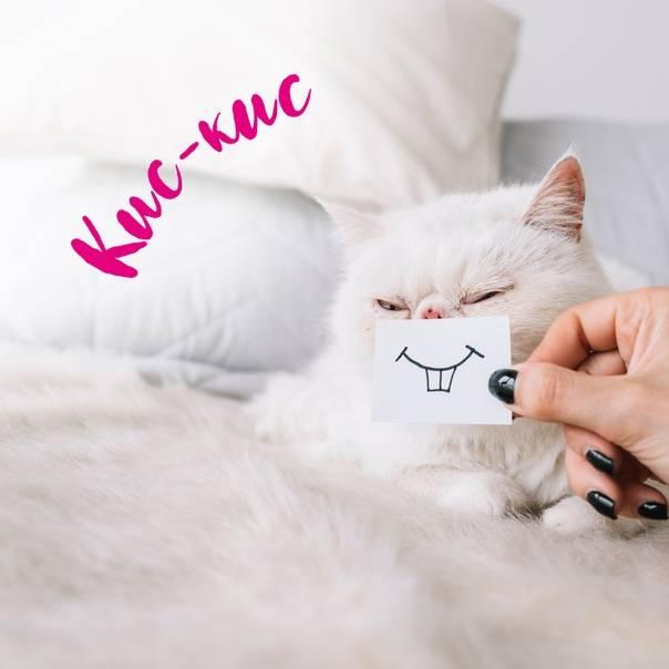 Почему большинство кошек откликается на кис-кис?