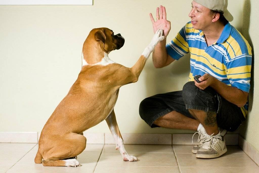 24 примера, когда домашние животные чуть не довели своих владельцев до сердечного приступа