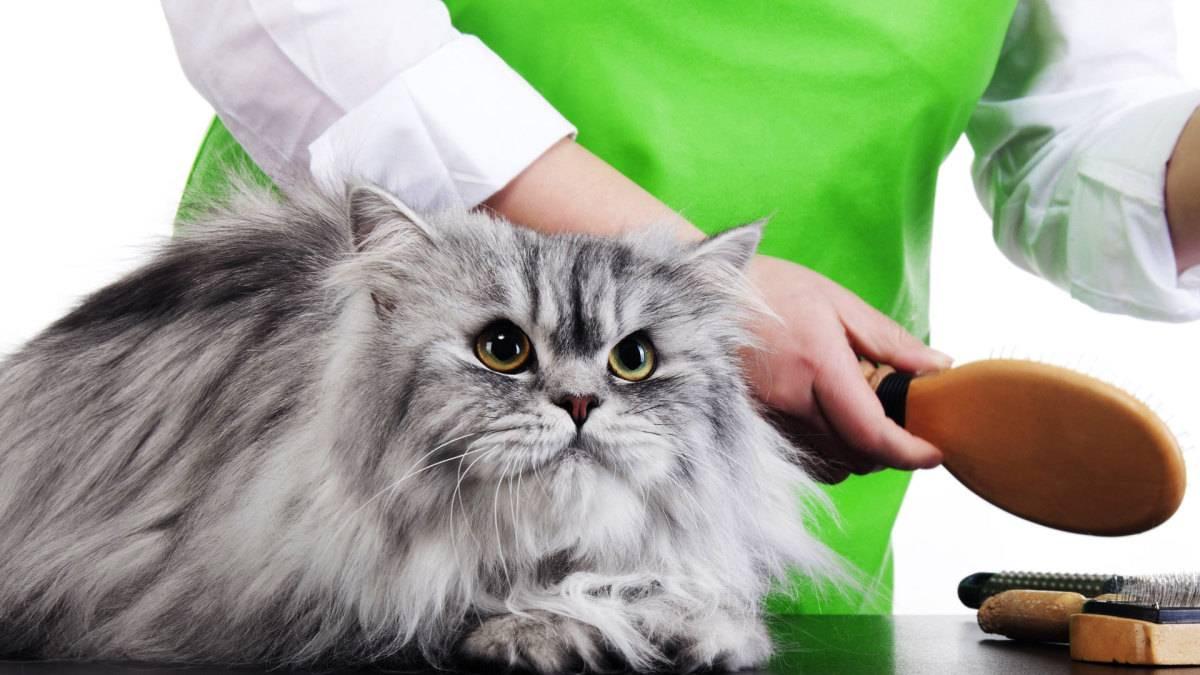 Стрижка кошек и котов на дому и профессиональный груминг: особенности процедуры, алгоритм действий и последствия