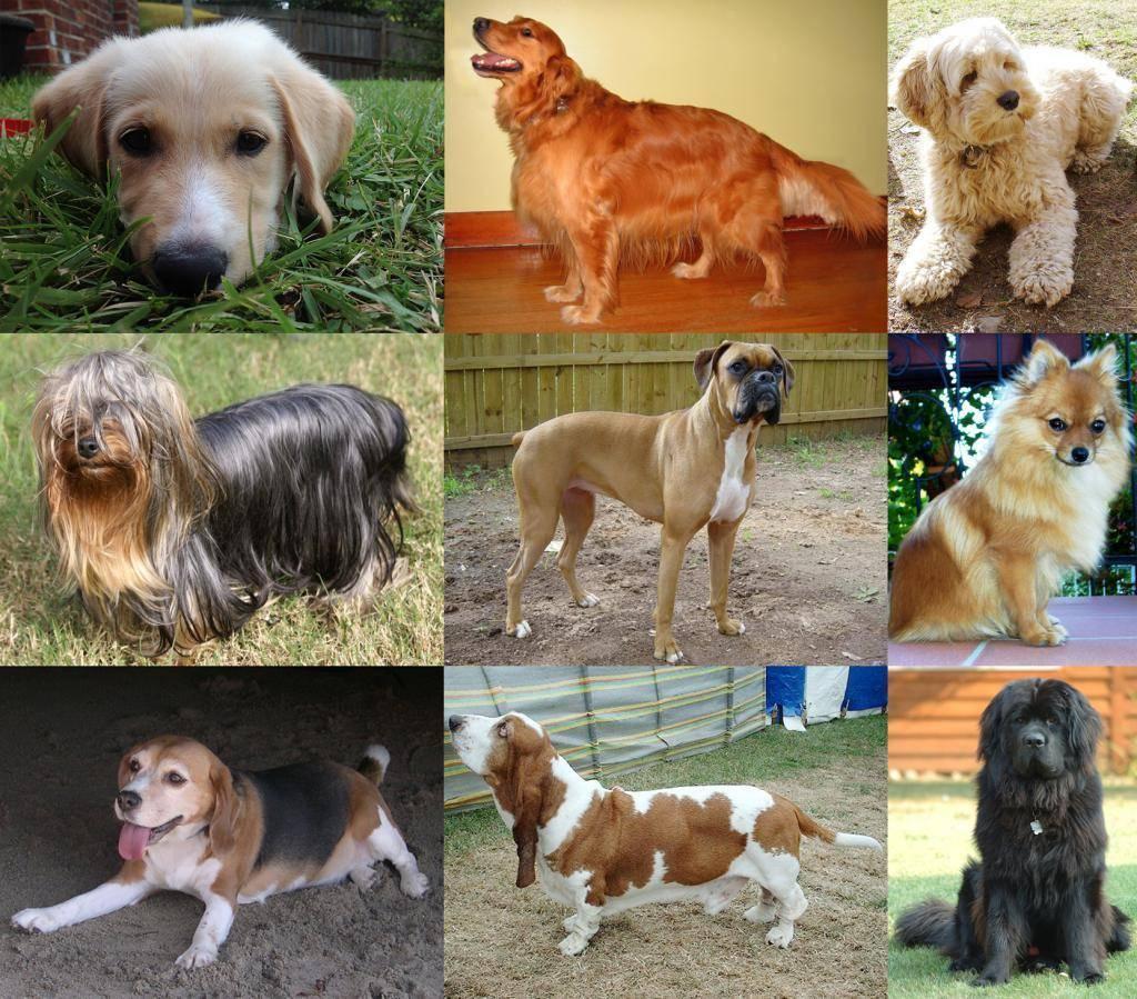 Русские породы собак: разновидности и советы по выбору