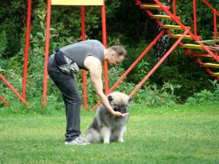 Команда «нельзя!»: как научить собаку командам «нельзя!» и «нет!», почему запрещена команда «фу!»