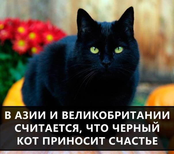 В каких странах черные кошки приносят удачу